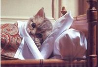 Sick_cat_image1-300x205