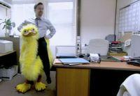 Brent ostrich